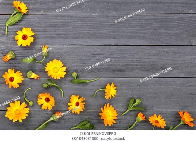 Calendula. Marigold flower on black white background with copy space for your text. Top view