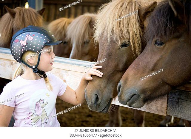 Girl sitting next to Icelandic Horses in a stable. Austria