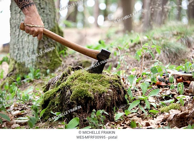 Hand holding axe at tree stump in the forest