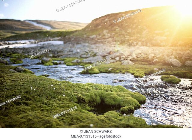 Brook with moss and cotton grass on the banks in Sarek National Park, Sweden