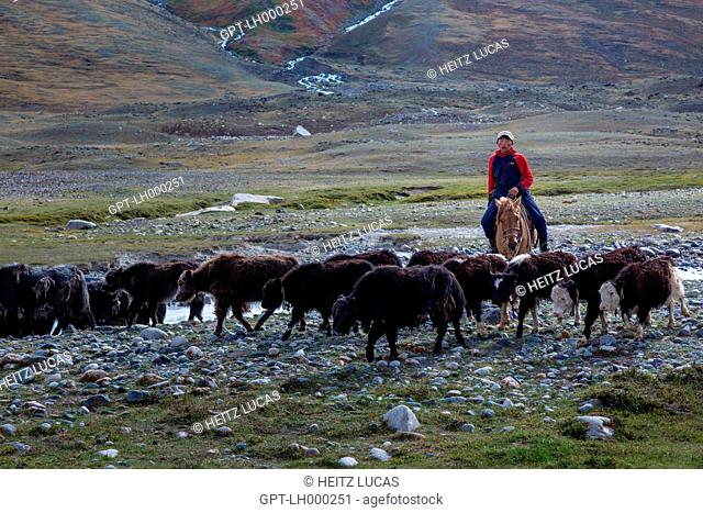 YOUNG KAZAKH RIDER LEADING HIS HERD OF YAK, TAVAN BOGD MASSIF, ALTAI, BAYAN-OLGII PROVINCE, MONGOLIA