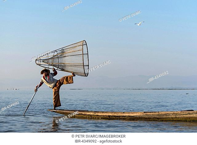 Intha fisherman fishing with traditional conical fishing net, Inle Lake, Burma, Myanmar