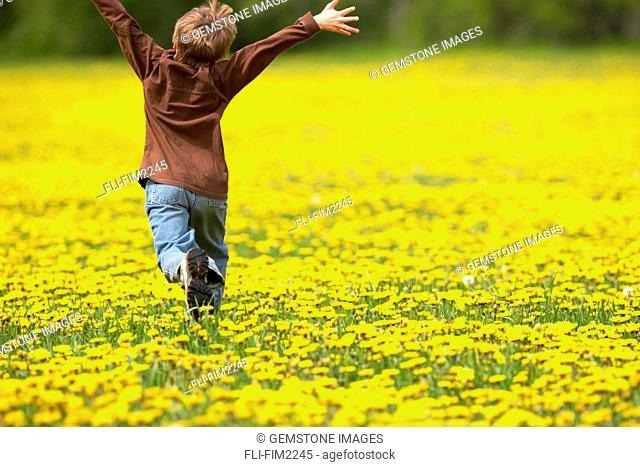 Young Boy Running through Field of Dandelions with Hands up in the Air, Fernie, British Columbia