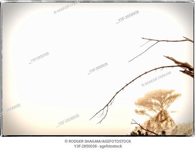 Broken branches in the morning sky