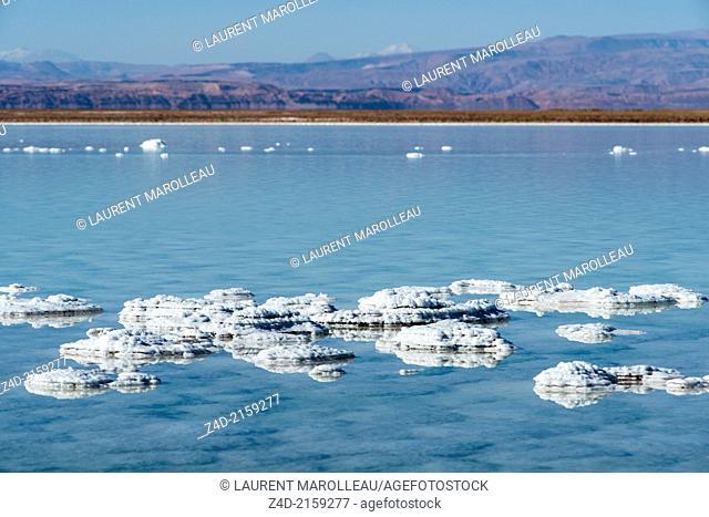 Salt formations in Cejar Lagoon (Laguna cejar) and Mountain Range, Salar de Atacama, Atacama Desert, Antofagasta Region, Chile, South America