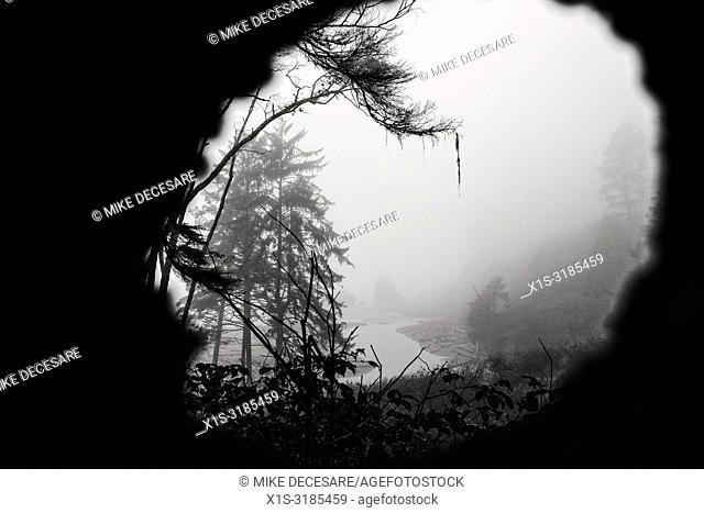 Dense fog envelops Ruby Beach on the west coast of Washington in Olympic National Park