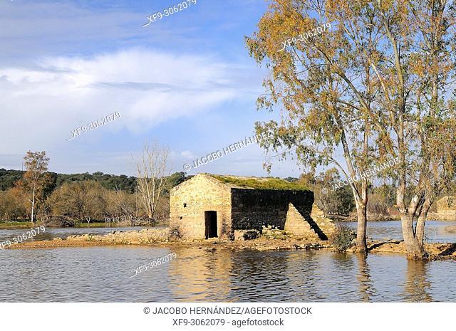 Watermill. Guadiana river. Olivenza. Badajoz province. Extremadura. Spain