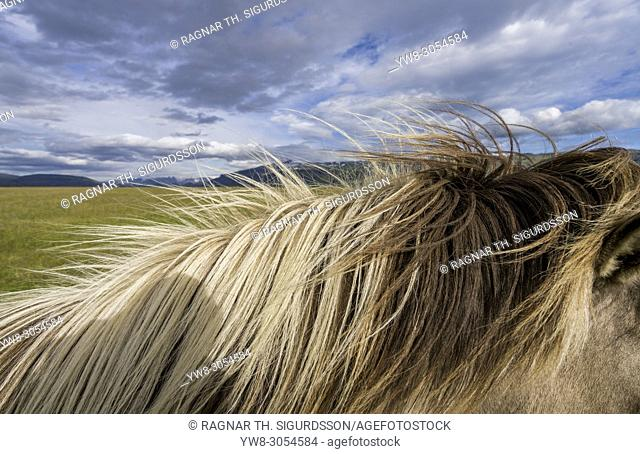 Mane of Icelandic Horse, Iceland
