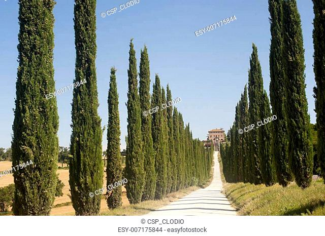 Amelia (Terni, Umbria, Italy) - Old villa and cypresses