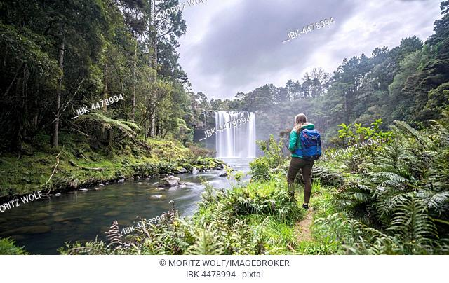 Hiker faces waterfall, Rainbow Falls or Waianiwaniwa, Kerikeri River, Northland, North Island, New Zealand