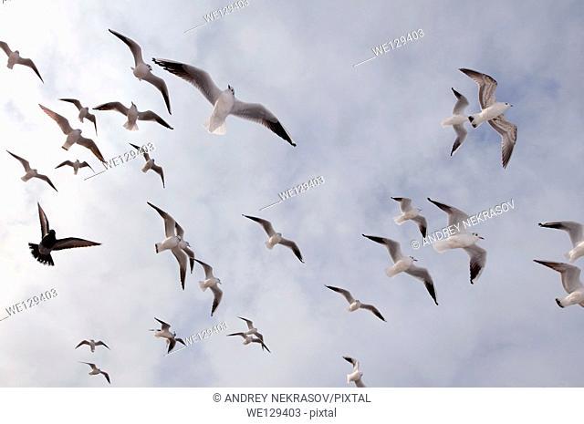 birds, Odessa, Ukraine, Eastern Europe