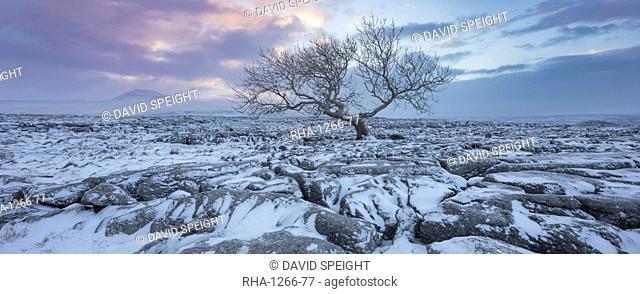 View to Ingleborough Hill from Twisleton Scar at sunrise in winter, Ingleton, Yorkshire Dales National Park, North Yorkshire, Yorkshire, England, United Kingdom