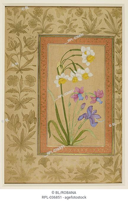 Narcissus and iris growing against an uncoloured background. Opaque watercolour. Image taken from Dara Shikoh. Originally published/produced in 1630-1640