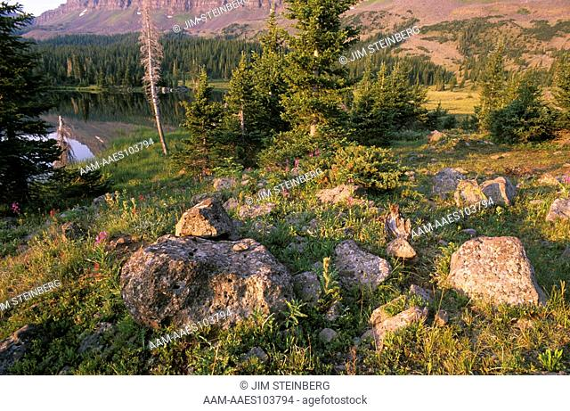 Colorado Landscape: White R. NF, Flat Tops Wilderness Area, in Summer