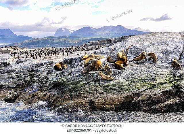 A big group of seals and sea lions, Beagle Channel, Ushuaia, Argentina