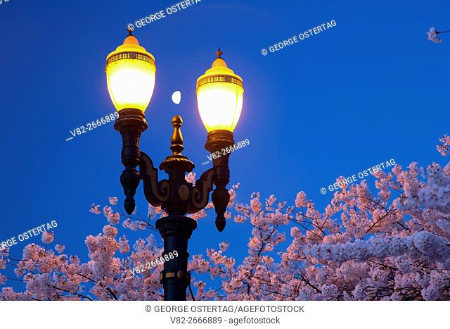 Cherry bloom with street light, Tom McCall Waterfront Park, Portland, Oregon
