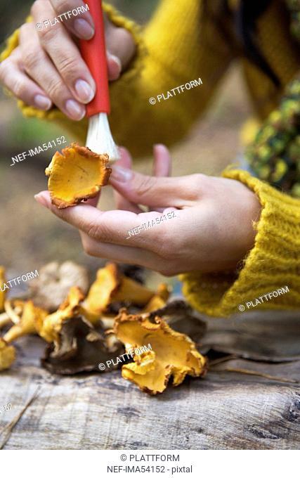 Mushrooms, Sweden