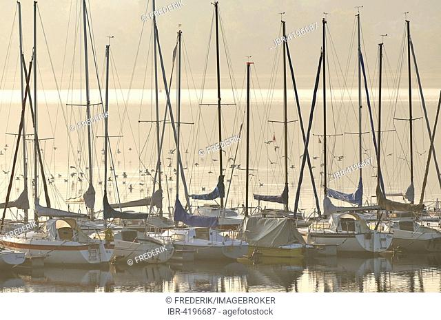 Sailboats at landing stage with early morning fog above lake Möhnesee, North Rhine-Westphalia, Germany