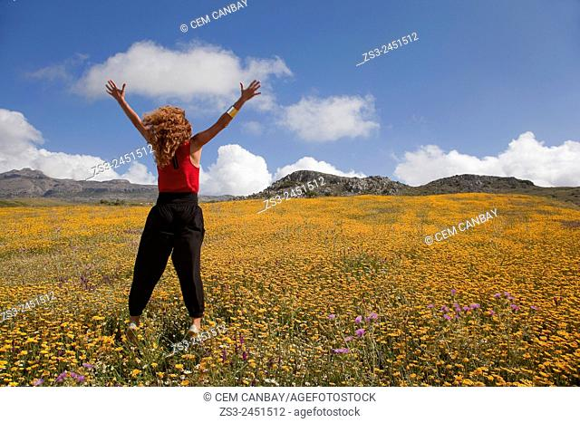 Woman at the golden daisy field, Rethymno Region, Crete, Greek Islands, Greece, Europe