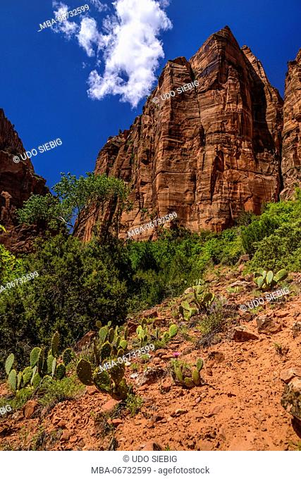 The USA, Utah, Washington county, Springdale, Zion National Park, Zion canyon, Kayenta Trail