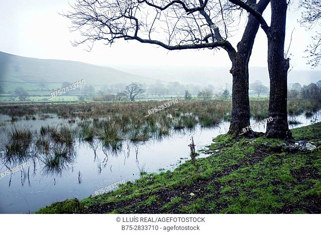 Early morning rural landscape with mists, two trees and River Wharfe, Buckden North Yorkshire, Yorkshire Dales, Skipton, England, UK