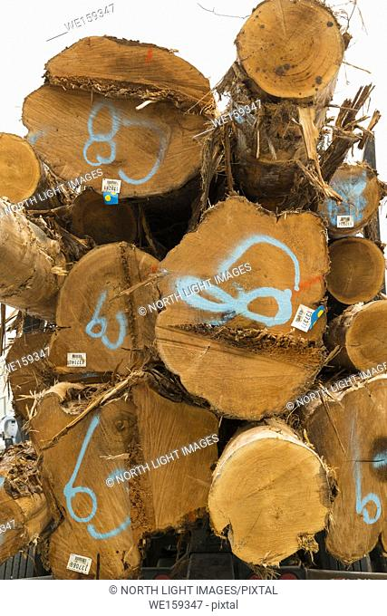 Canada, BC, Sunshine Coast. Logs marked with spraypaint to indicate grade. Piled on the back of a logging truck, being transported to lumber mill