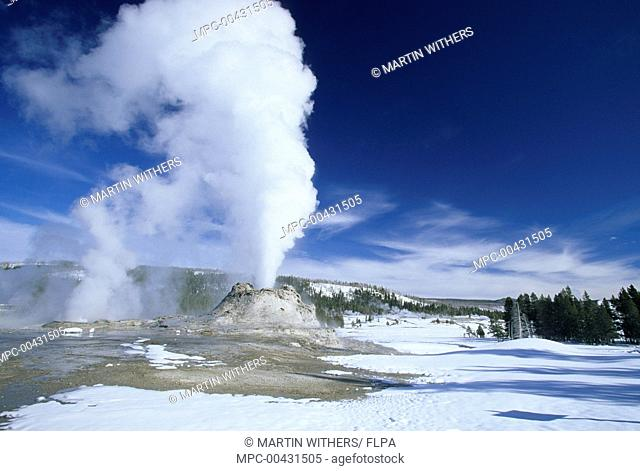 Erupting geyser in snow covered landscape, Castle Geyser, Yellowstone National Park, Wyoming