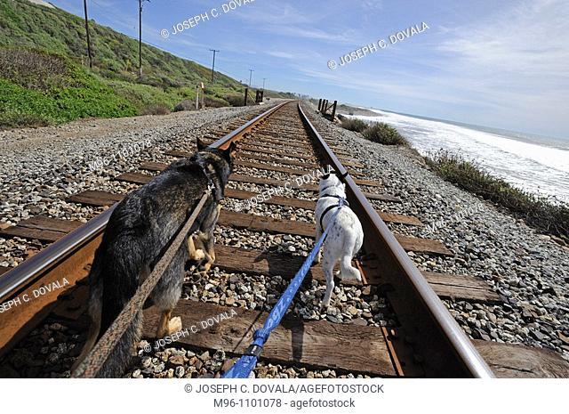 Mixed breed dogs walking along railroad tracks, Ventura, California, USA