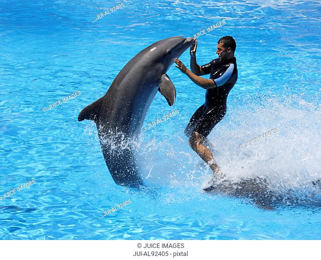 Bottlenose dolphins and trainer, Loro Parque, Tenerife, Canary Islands, Spain