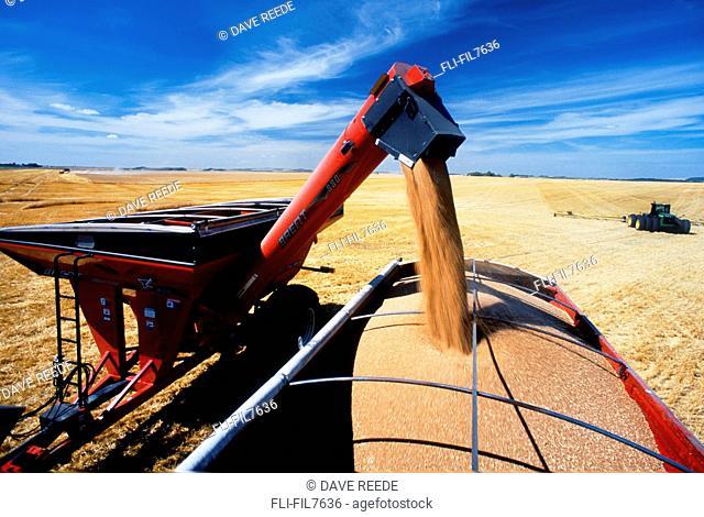Grain Wagon Loading Farm Truck, Tiger Hills, Manitoba