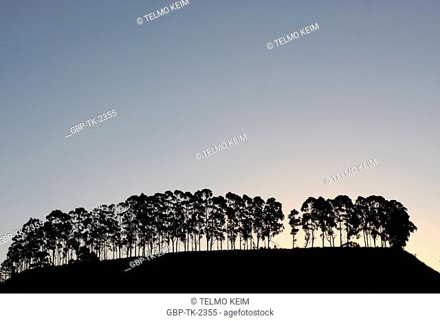 Trees, Belo Horizonte, Minas Gerais, Brazil