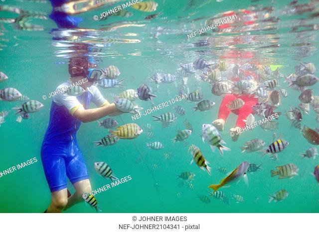 Children swimming with fish around