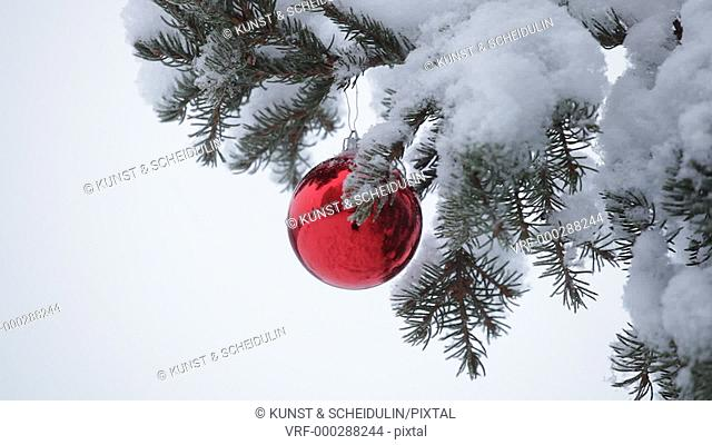 A red Christmas bauble is hanging on a snow covered fir tree. Snow is falling and the red ball swings slowly in the wind
