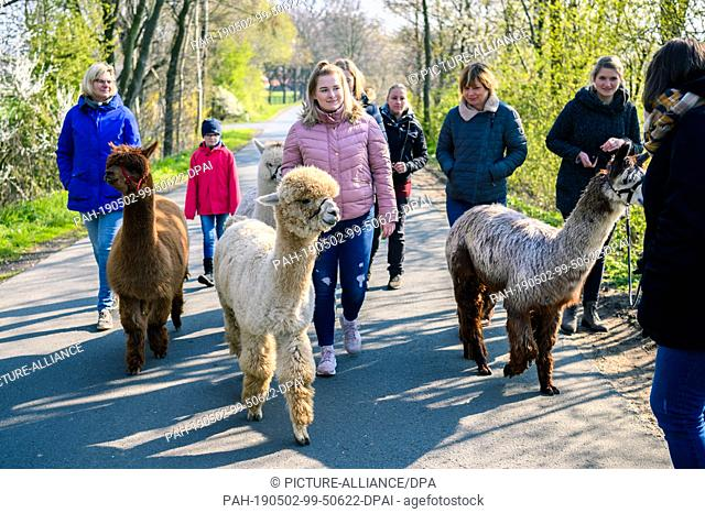14 April 2019, Lower Saxony, Drantum: A group of people go for a walk with alpacas. Photo: Mohssen Assanimoghaddam/dpa. - Drantum/Lower Saxony/Germany