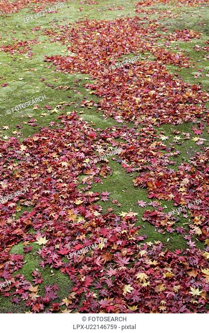 The Autumn Leaves Which Fell To The Yard Of Moss