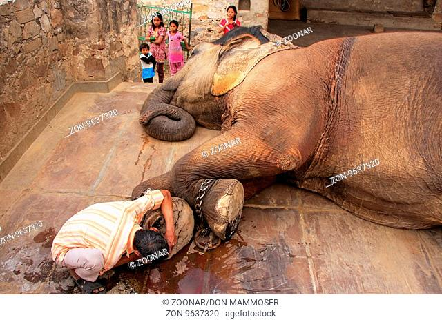 Local caretaker cleaning elephant's foot at small elephant quarters in Jaipur, Rajasthan, India. Elephants are used for rides and other tourist activities in...