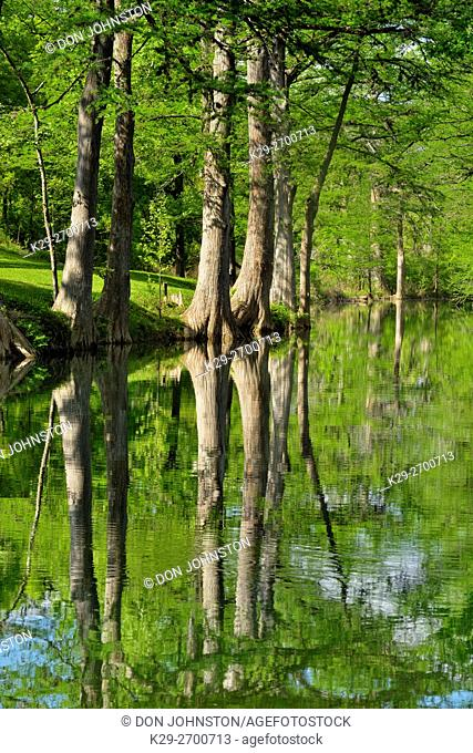 Onion Creek with reflected cypress trees, Hays County, Texas, USA