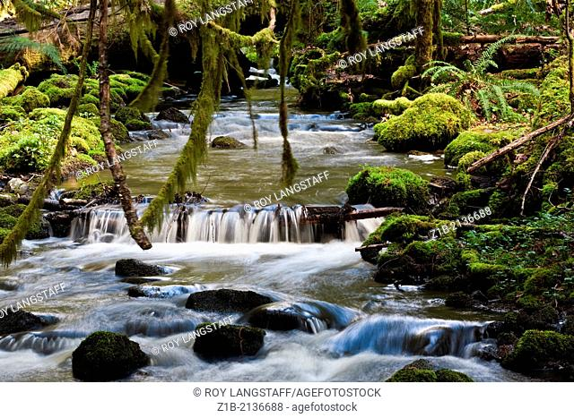Stream flowing through a rain forest on Vancouver Island, Canada