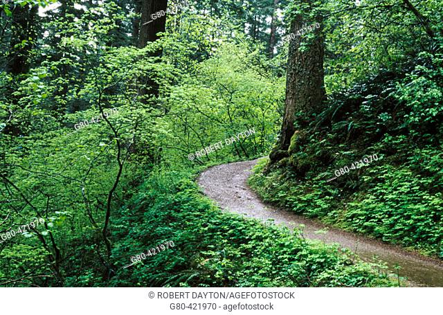 Columbia River Gorge National Scenic Area. Washington, USA