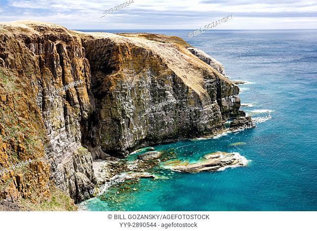 Rugged Coastal Landscape at Cape St. Mary's Ecological Reserve, Cape St. Mary's, Avalon Peninsula, Newfoundland, Canada