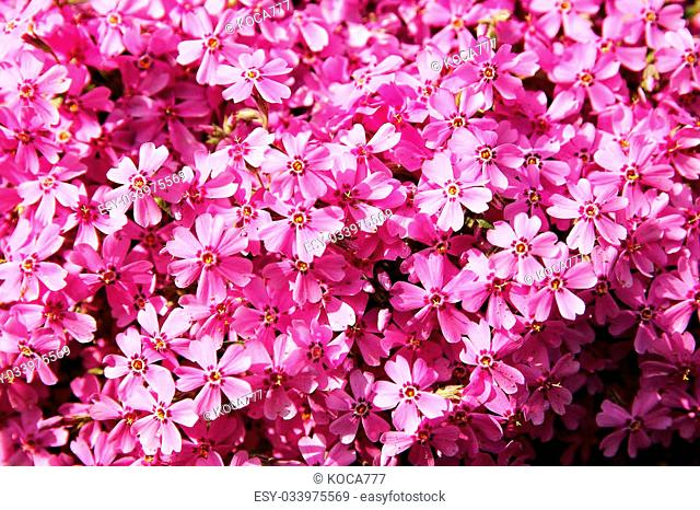 background beautiful live flowers