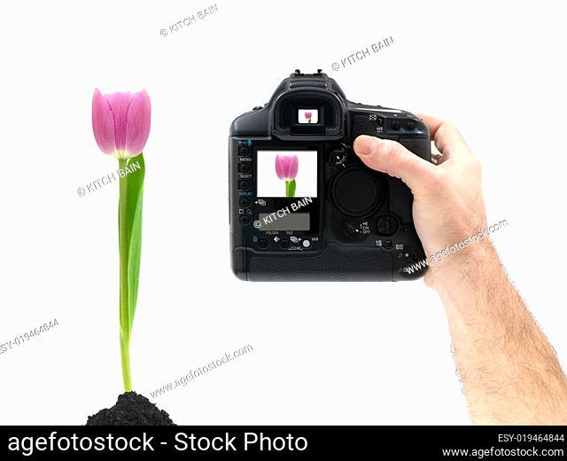 Hand Held Digital Camera