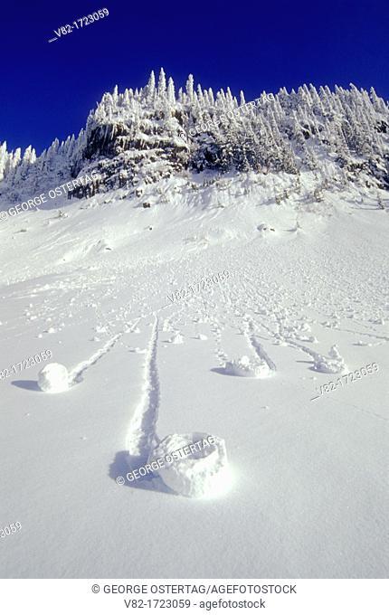 Snow roller, Mt Rainier National Park, Washington