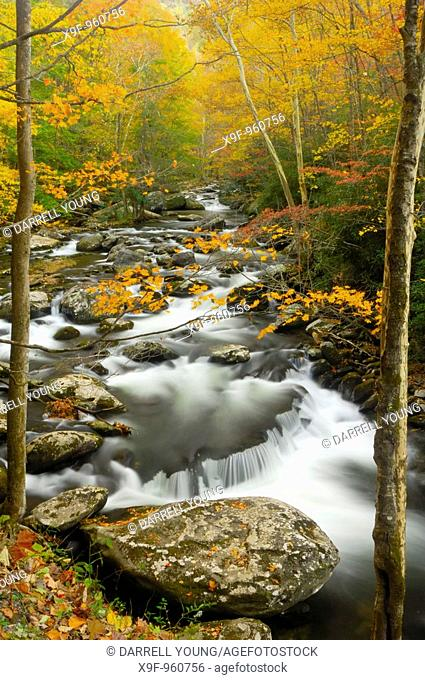 Waterfalls in the middle prong of the Little Pigeon River in Tremont of Great Smoky Mountains National Park, Tennessee, USA in Autumn