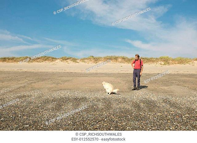 Dog defecating on beach