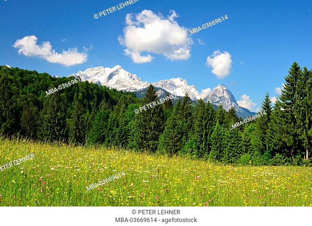 Germany, Bavaria, Loisachtal, flower meadow, mountain forest, Zugspitzgebirge