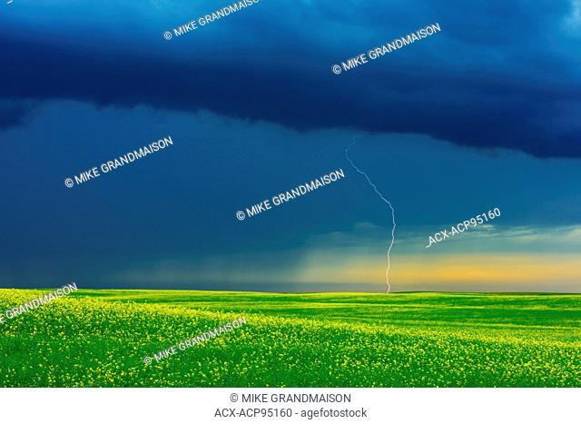 Lightning strike during rain storm on the Canadian Prairie Deloraine Manitoba Canada