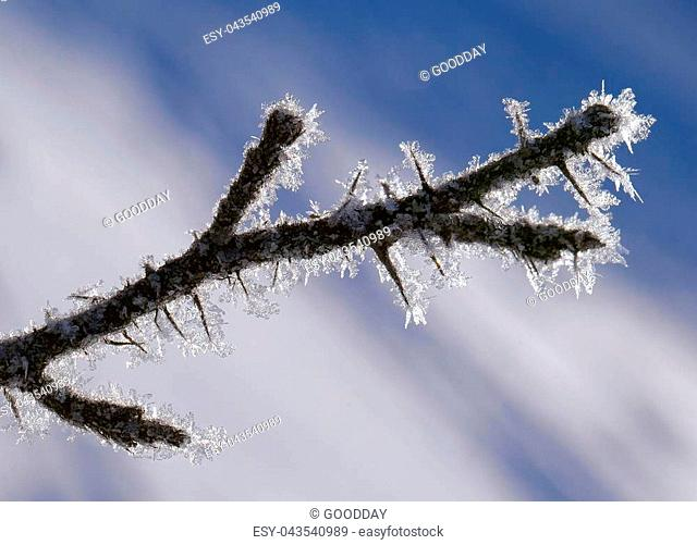 Twig covered with ice crystals, macro shot