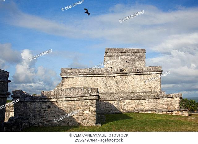 Eagle flying on the sky at Tulum Ruins, Quintana Roo, Yucatan Province, Mexico, Central America