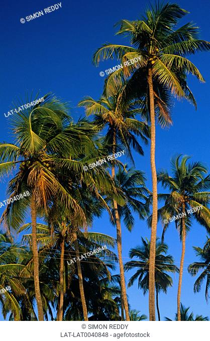 Palm trees. Blue sky. Green leaves